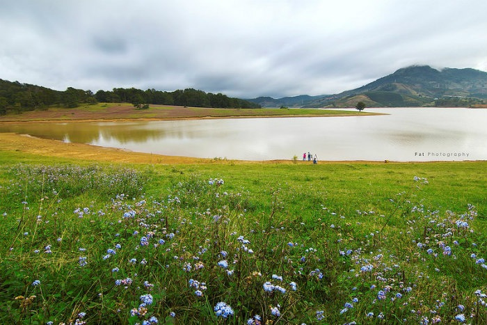 Cỏ cây hồ Dankia - Suối Vàng