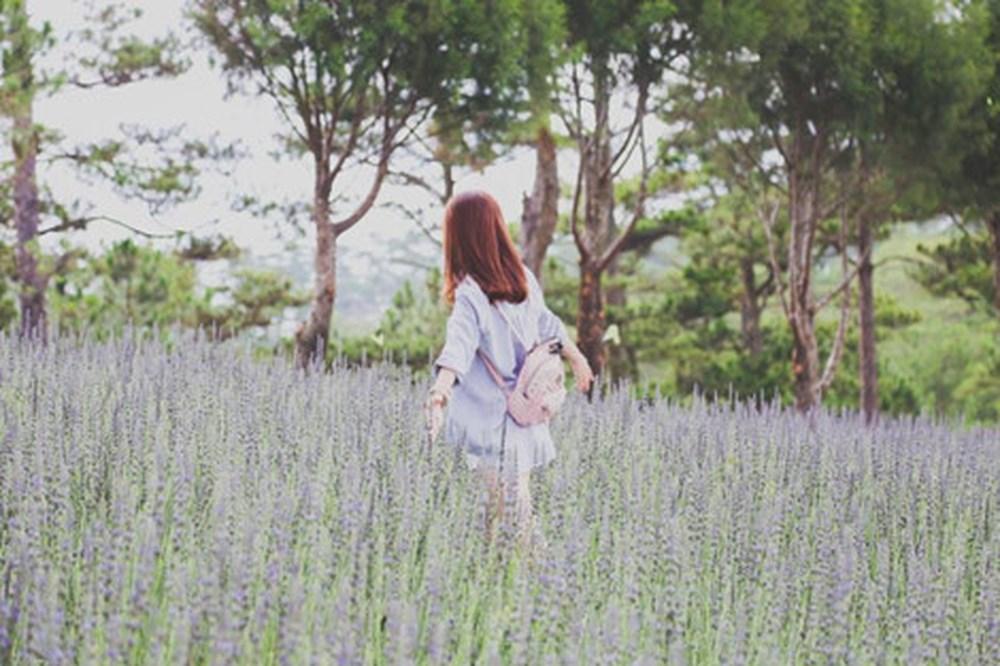 Chụp ảnh cùng hoa Lavender