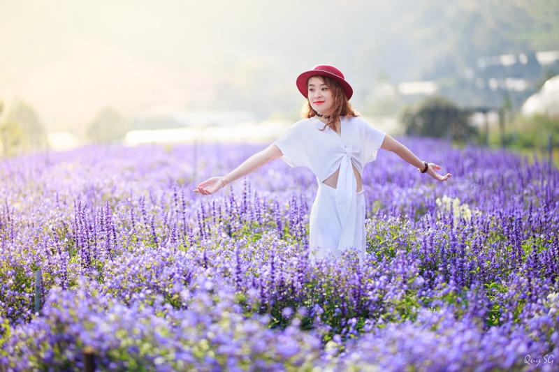 cánh đồng hoa oải hương đà lạt