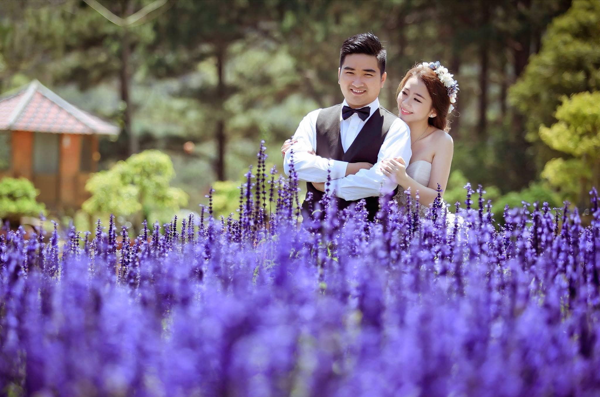 Chụp ảnh cưới đẹp lung linh tại vườn hoa Lavender