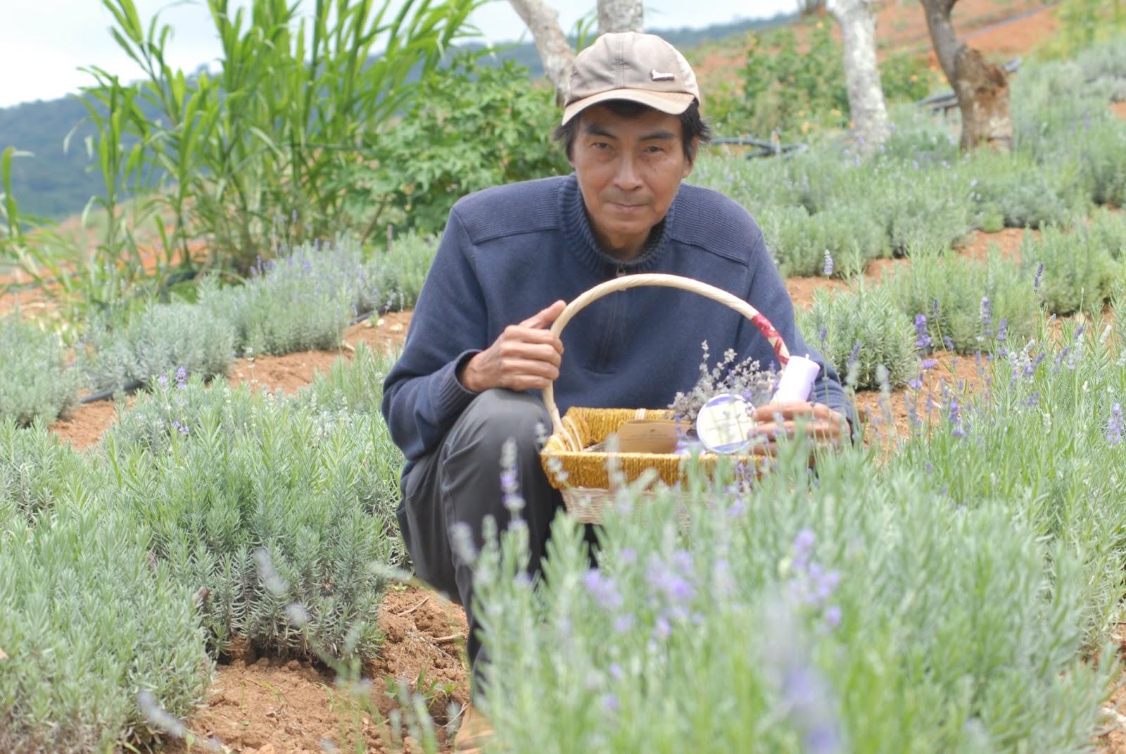 Hoa Lavender – nét đẹp Đà Lạt