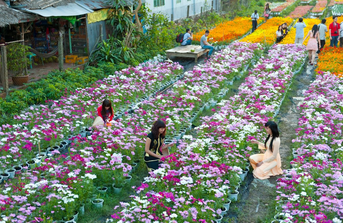 Làng hoa Vạn Thành Làng Cù Lần