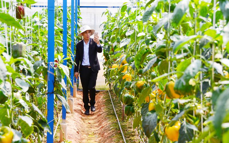 Vườn dưa hấu Định Farm