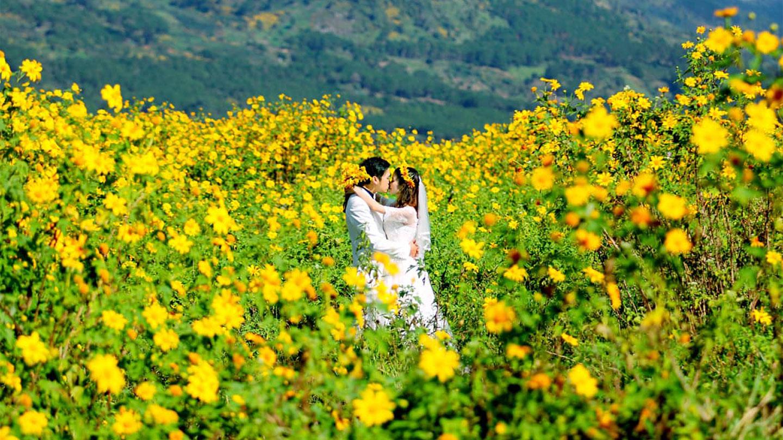 Hoa dã quỳ đẹp rạng rỡ
