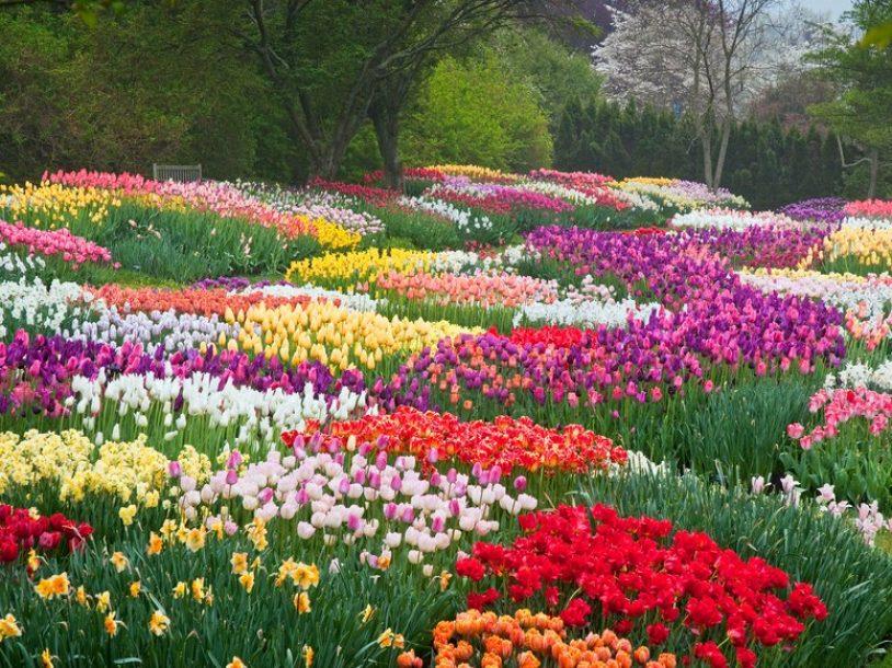vườn hoa công viên trong thành phố