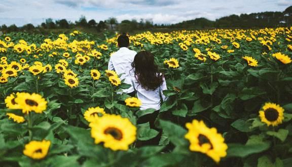 Cánh đồng hoa hướng dương ở Đà Lạt