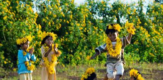 Tháng 10 Đà Lạt ngập màu nắng hoa dã quỳ