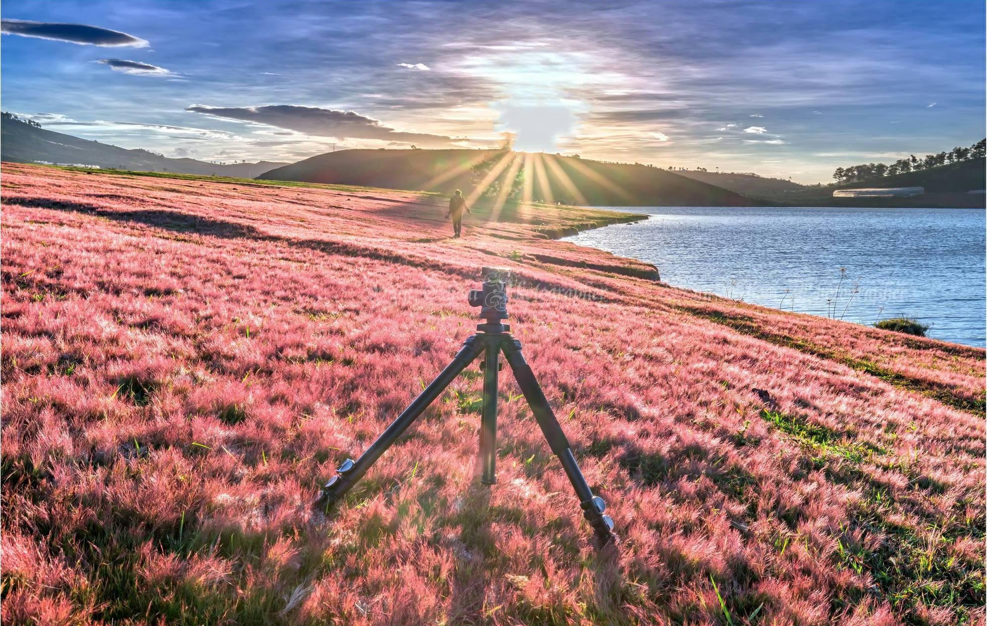 Đồi cỏ hồng Đan Kia – Suối vàng